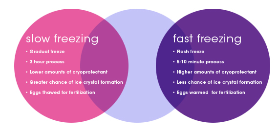 Eggsurance_Diagram_Slow_Fast_Freezing