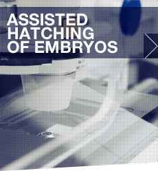 Hatching_embryos