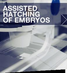 Hatching_embryos