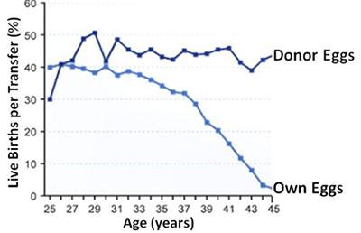 frozen-egg-bank-donor-graph
